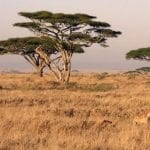 11_Days_Kenya_Classic_Safari_–_Mara,_Nakuru,_Mt_Kenya,_Samburu_&_Mombasa