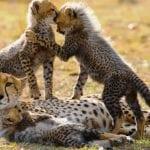 3_Days_Masai_Mara_Budget_Safari_Package