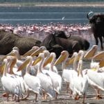 4_Days_Masai_Mara_&_Lake_Nakuru_Package