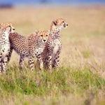 6_Days_Lake_Manyara_Ngorongoro_Budget_Adventure_Tanzania