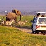 6_Days_Masai_Mara,_Lake_Nakuru_&_Amboseli