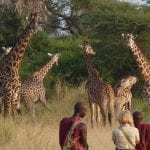7_Days_Serengeti_Safari